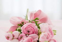 Catégorie Fleurs et plantes