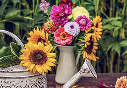 Catégorie Décoration / Jardins