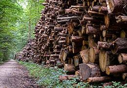 Catégorie Agriculture et foresterie