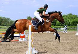 Catégorie Equitation